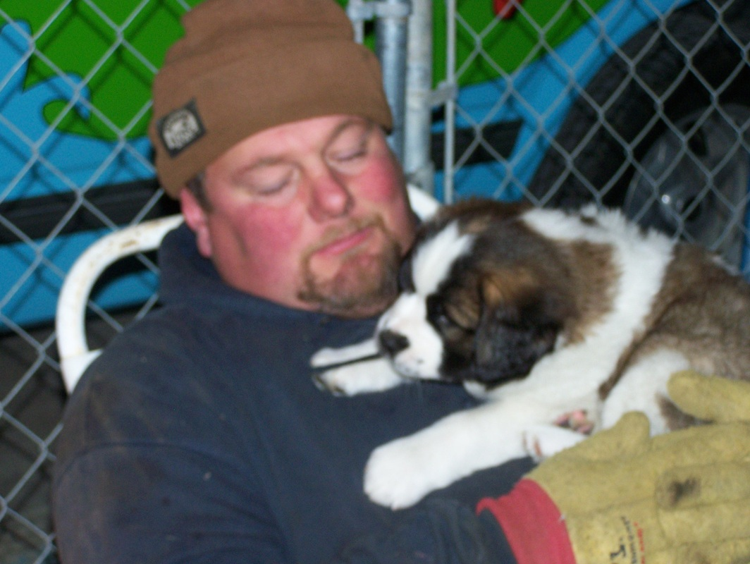 About Us - The Digman's Saint Bernard Puppies